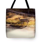 Mule Deer   #3942 Tote Bag