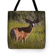 Mule Deer Buck In Velvet   #2164 Tote Bag