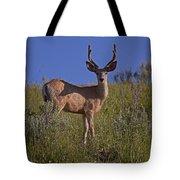 Mule Deer Buck In Velvet   #2231 Tote Bag