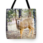 Mule Deer Does Tote Bag