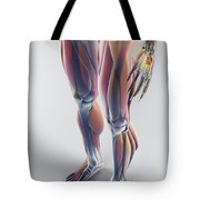 Muscles Of The Lower Body Tote Bag