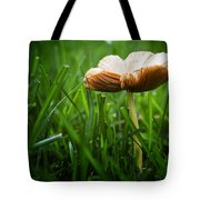Mushroom Growing Wild On Lawn Tote Bag