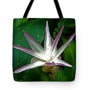 Narcissus In Jim Thompson House And Museum In Bangkok-thailand. Tote Bag