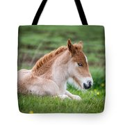 New Born Foal, Iceland Purebred Tote Bag