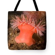 Northern Red Anemone Tote Bag