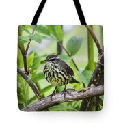 Northern Water Thrush Tote Bag