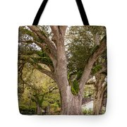 Oak Alley Backyard Tote Bag