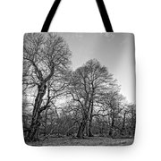Old Trees Tote Bag