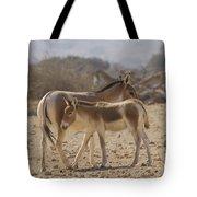 Onager Equus Hemionus 1 Tote Bag