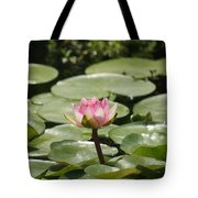 1 Open Pink Lily And 1 Opening... Tote Bag
