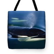 Orca Whale Surfaces In Lynn Canal Tote Bag