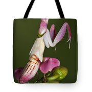 Orchid Mantis Tote Bag