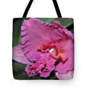 Orchid Sophrocattleya Royal Beau   H And R Tote Bag