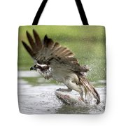 Osprey With A Living Fish, Fischadler Tote Bag