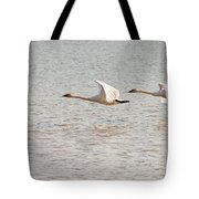 Pair Of Flying Trumpeter Swans Cygnus Buccinator Tote Bag
