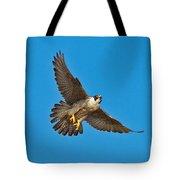 Peregrine Falcon In Flight Tote Bag