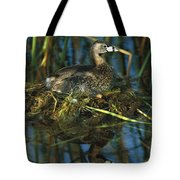 Pied-billed Grebe Nesting Texas Tote Bag