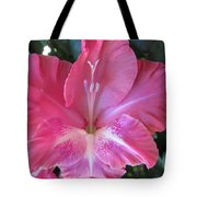 Pink And White Gladiolus Tote Bag