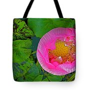 Pink Lotus In Backyard Of Home In Bangkok-thailand. Tote Bag