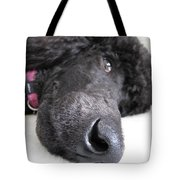 Poodle Close-ups 1 Tote Bag