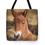 Portrait Of Newborn Foal Tote Bag
