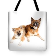 Icelandic Sheepdog Puppy And Adult  Tote Bag
