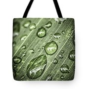 Raindrops On Green Leaf Tote Bag by Elena Elisseeva