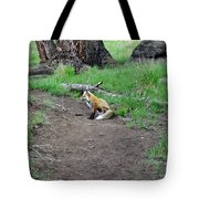 Red Fox In Yellowstone Tote Bag