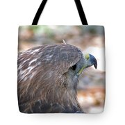 Red Tailed Hawk 2  Tote Bag