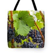 Red Wine Vineyard 3 Tote Bag