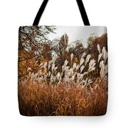 Reeds Highlighted By The Sun Tote Bag