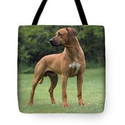 Rhodesian Ridgeback Dog Tote Bag