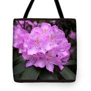 Rhododendron  ' Roseum Elegans ' Tote Bag
