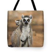 Ring-tailed Lemur And Baby Madagascar Tote Bag