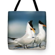 Royal Terns Tote Bag