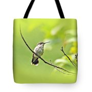Ruby-throated Hummingbird - Immature Female - Archilochus Colubris  Tote Bag