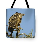Rueppells Vulture Tote Bag