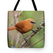 Rufous Wren Tote Bag