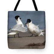 Sandwich Tern Bringing Fish To Its Mate Tote Bag