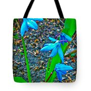 Scilla In New Maiden Cemetery In Moscow-russia  Tote Bag