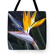 Seaport Bird Of Paradise Tote Bag