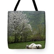 Sheeps Tote Bag