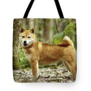Shiba Inu Dog Tote Bag