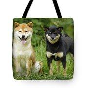 Shiba Inu Dogs Tote Bag
