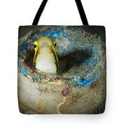 Short-head Sabretooth Blenny Peering Tote Bag