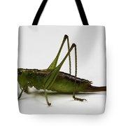 Short-winged Meadow Katydid Tote Bag