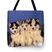 Siberian Husky Puppies Tote Bag