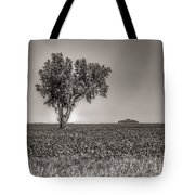 Single Tree In The Bean Field Tote Bag