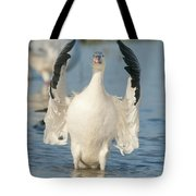 Snow Goose Flapping Skagit River Tote Bag