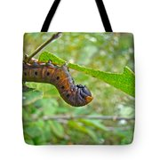 Snowberry Clearwing Hawk Moth Caterpillar - Hemaris Diffinis Tote Bag